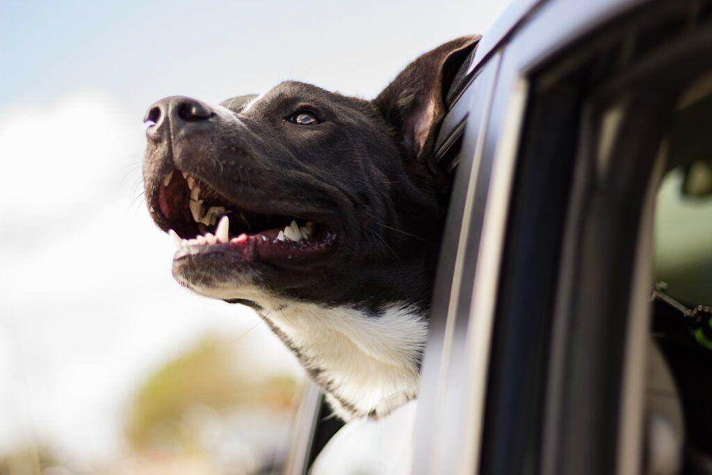 Pes také musí splňovat určití podmínky pro to, aby mohl vstoupit do Švýcarska.