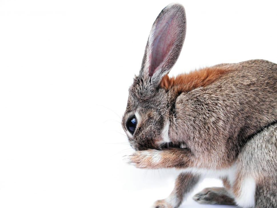 Samotná firma Ryor na zvířatech netestuje finální produkty ani jednotlivé suroviny. Je však možné, že některé využívané ingredience v minulosti na zvířatech testovány byly.